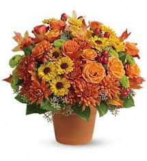 199 best thanksgiving flowers images on thanksgiving