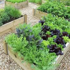 veggie garden beds melbourne vegetable garden beds perth raised