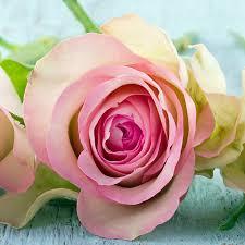 flowers in november five reasons to send flowers in november pollennation