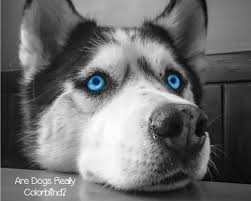 Are All Dogs Colour Blind Is It True That Dogs Are Colorblind Dogvills