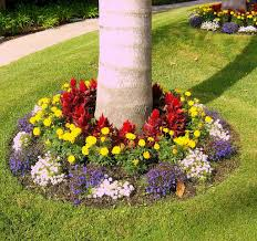 colorful tree base landscaping outdoor decor