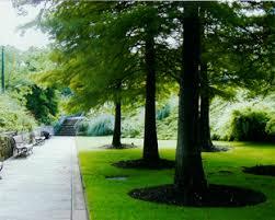 Landscape Management Services by Professional Landscape Management Services