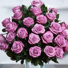 purple roses roses in the air 1 877 417 9657 home