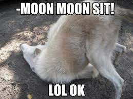 Moon Moon Memes - moon moon know your meme