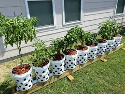 vegans living off the land recycled bucket gardening container