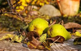 cuisiner le fruit de l arbre à images gratuites arbre la nature branche plante fruit doux