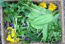 Dandelion Facts Wild Nutrition Facts