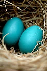 robin u0027s eggs my man u0027s favorite color is blue and his name is