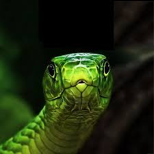 snake live wallpaper android apps on google play