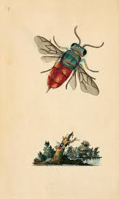 v 1 1792 the natural history of british insects