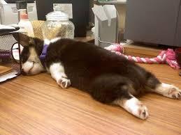 Tired Dog Meme - tired dog blank template imgflip