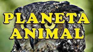Preferidos Planeta Animal - PTEROSSAUROS - YouTube #DS44