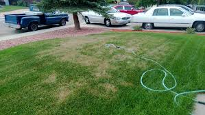 new sod dying and it doesn u0027t seem to be because of the heat ask