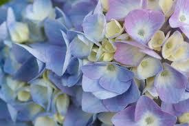 blue u0026 purple flowers by nature
