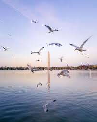 Interesting Facts About Flags 13 Interesting Washington Monument Facts