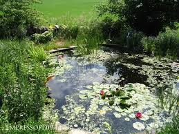 Pond Landscaping Ideas 17 Beautiful Backyard Pond Ideas For All Budgets Empress Of Dirt