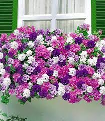balkon blumen die top 20 der balkonblumen bald wird s bunt petunien