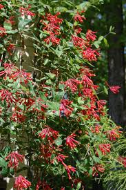 Best Fruit Trees For North Carolina - 57 best honey bee plants for nc images on pinterest honey bees