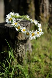 daisy wreath country lifestyle beauty details www albertalagrup