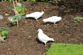 birds are eating seedlings u2013 how to protect seedlings from birds