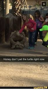 Funny Turtle Memes - honey don t pet the turtle right now ifunnyce funny meme on me me