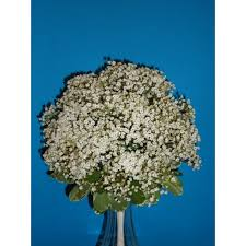Baby S Breath Bouquets Baby U0027s Breath Bouqet Flowers By Lady Di Alliston Ontario L9r1k6