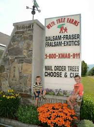 weir tree farms colebrook new hshire balsam fraser and