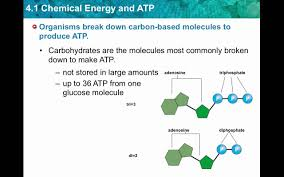 chapter 4 1 chemical energy and atp youtube
