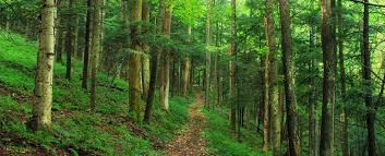 looking at trees can reduce your stress levels even in the middle