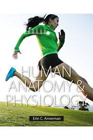 human anatomy 8th edition images human anatomy image