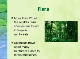 Tropical Rainforest Plant List - rainforest