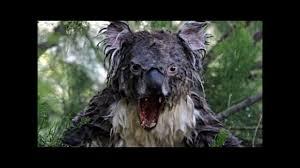 Angry Koala Meme - koala bear pictures youtube