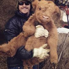 Calf Hutch Tractor Supply 46 Best Livestock Love Images On Pinterest Livestock Tractor