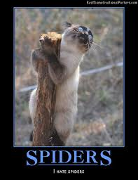 Afraid Of Spiders Meme - list of synonyms and antonyms of the word spider humor