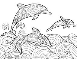 dolphin coloring pages pdf free printable dolphin adult coloring page download it in pdf free