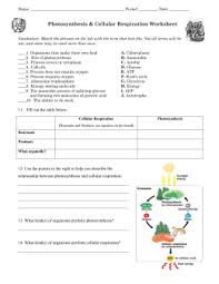 Photosynthesis And Cellular Respiration Worksheet Photosynthesis And Cellular Respiration Review