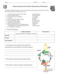 photosynthesis pogil lesson key