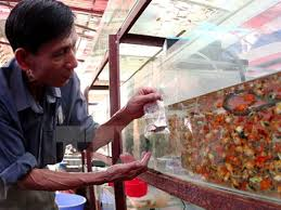 hcm city looks to expand ornamental fish industry báo công an