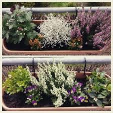 herbstbepflanzung balkon 8 besten herbstbepflanzung balkon bilder auf gardening
