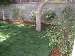 design southern hemisphere garden gardenerd