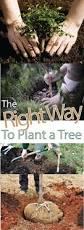 best 25 organic fruit trees ideas on pinterest fruit garden