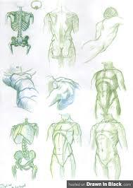 Human Anatomy Pdf Books Free Download 7 Tutorials On How To Draw The Human Anatomy Body Figure