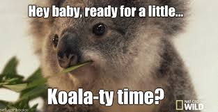 koalas album on imgur