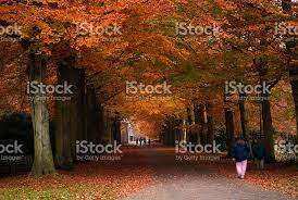 autumn colors in the forest stock photo 146864638 istock