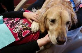 Comfort Golden Meet The Dog Who Makes Kids Actually Like Going To The Dentist