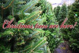 seasonal concepts trees lights decoration