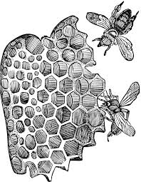 cells of honey bees clipart etc
