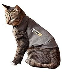 How To Comfort A Cat In Heat Amazon Com Thundershirt Classic Cat Anxiety Jacket Heather Gray