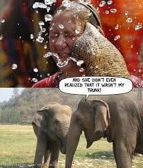 Elephant Meme - elephant trunk skirt screaming vagina women funny win fail memes