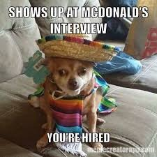 Chihuahua Meme - new chihuahua meme album on imgur